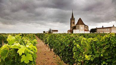 Photo of Откриваме зошто Бордо е најдобриот винарски регион во светот
