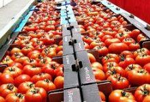 Photo of Намаленото производство ја крева цената на доматите и краставиците во Струмичко