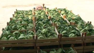 Photo of Корона кризата удри по земјоделието