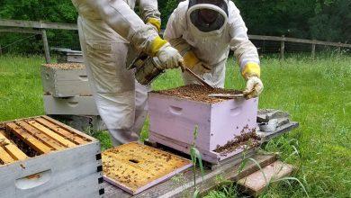 Photo of Пчеларникот во јуни
