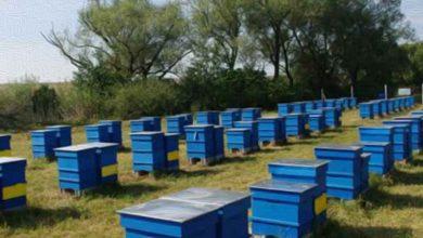 Photo of Нова финансиска помош за сточарите и пчеларите преку Мерката 121