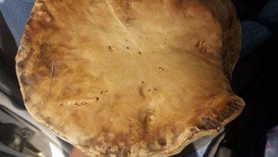 Photo of Печурка тешка над еден килограм пронајдена во Делчевско