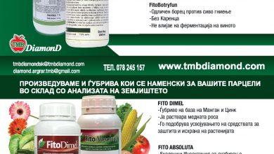Photo of ТМБ ДИАМОНД- здравјето влегува преку коренот