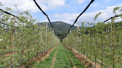 Photo of Пестициди – потреба која мора да се контролира