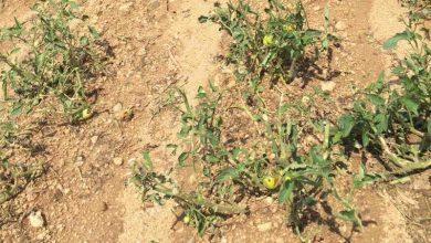 Photo of Земјоделците од Пелагонија ги пријавуваат штетите од невремето што ги зафати во последниот период