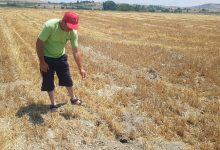 """Photo of Глувци ги """"прекопаа"""" нивите во Штипско, земјоделците бараат спас"""