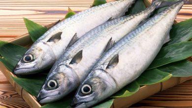 Photo of Италијанците јадат најмногу риба