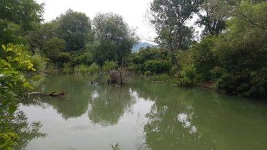 Photo of Живна флората и фауната во реката Брегалница