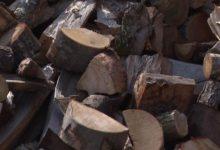 Photo of Шумското производство помало за пет отсто