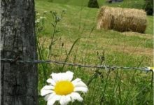 Photo of Земјоделски развој во хармоничен однос со природата