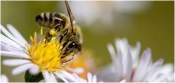 Photo of Пчелите се прогласени за најважни живи суштества на планетата Земја