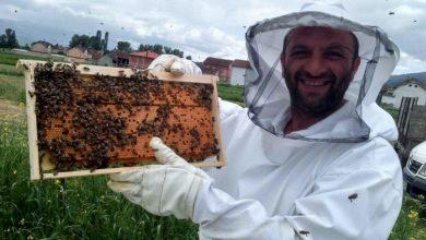 Photo of Намален приходот од пчелните семејства за 10 пати