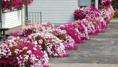 Photo of Совети за почетници: Правете го ова редовно и цвеќињата ќе цветаат подолго