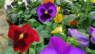 Photo of Тераграмин во вредните раце на производителите на цвеќе!