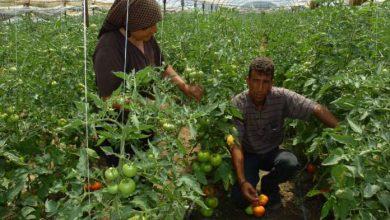 Photo of Македонските семиња со врвен квалитет