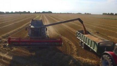 Photo of Срушен светскиот рекорд во приносот на пченицата со неверојатни 17,398 t / ha