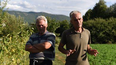 Photo of Иднината на градинарството во кичевско е во пластеничкотопроизводство,  велат браќата Јовановски