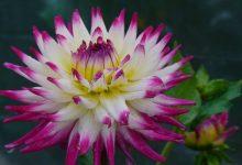 Photo of Кои цвеќиња можете да ги засадите во октомври?