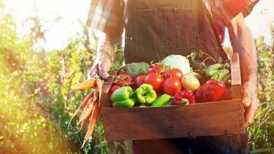 Photo of Зголемено органското производство на житата, овошките и грозјето, драстичен пад кај индустриските култури