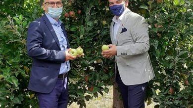 """Photo of Со """"Преспански јаболкобер 2020"""" и официјално почна бербата на јаболка во Преспа"""