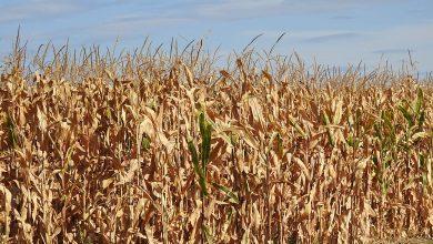 Photo of Земјоделството не може само против КОВИД, бара помош од државата