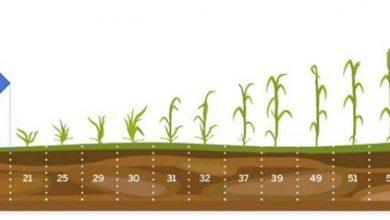 Photo of Заштита на житните култури во есенскиот период