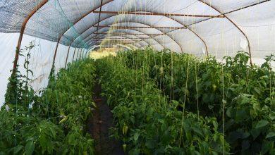 Photo of Интегрална заштита во градинарството
