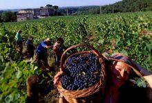 Photo of Како невидливите сезонски работници во земјоделството да го легализираат својот труд пред државата