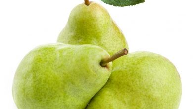 Photo of Заштита на јаболчестите и коскестите овошни видови во текот на зимскиот и рано пролетниот период