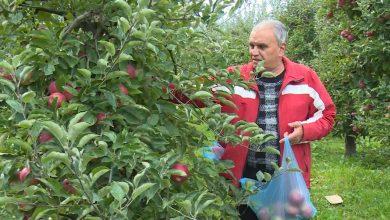 "Photo of Во тетовска Брвеница село познато по производство на ""тетовско јаболко"", откорнати се над 80 % од јаболковите насади"