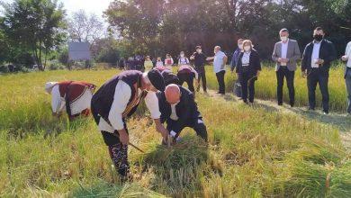 Photo of Официјално почна жетвата на оризот во Кочанско