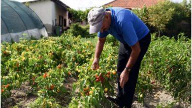 Photo of Градинарите од Струмичко задоволни од откупните цени на градинарските култури