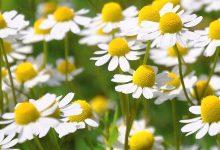 Photo of Дали би јаделе цветови како Новак Ѓоковиќ?