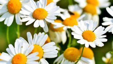 Photo of Препорачано за садење: Три растенија кои го намалуваат стресот и вознемиреноста
