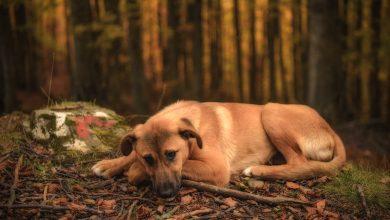 Photo of Есен – фотогалреија на Ивона Кочов