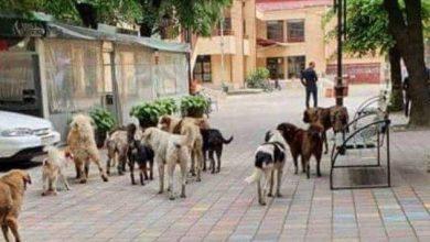 Photo of Ветеринарна амбуланта од Демир Хисар ќе ги третира кучињата скитници во Кичево