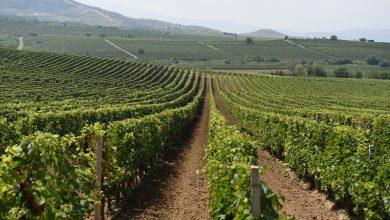Photo of Лозарите и винарниците отсекогаш на различна фреквенција