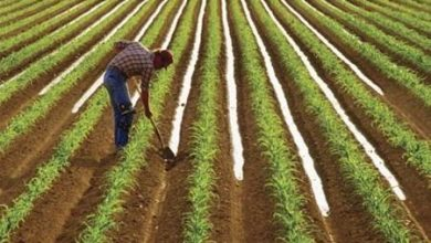 Photo of Напредок во окрупнување на земјиштето и задругарството, субвенциите се уште врзани само за производството