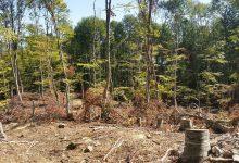 Photo of Нема место каде дрвокрадците не замешале прсти на Шарпланинскиот предел