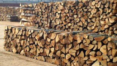 Photo of Производството на шумски производи зголемено, продажбата намалена