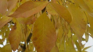 Photo of Ѓубриво од есенски лисја