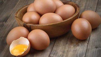 Photo of Кои јајца се најдобри за ведење?