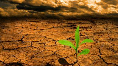 Photo of Надежите за спас од сушата се местимични и од локален карактер