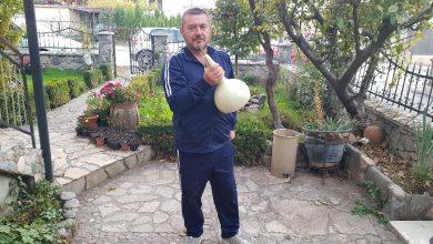 Photo of Лејки лични како невести одгледува етнологот Славко Горгиев