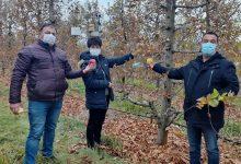 Photo of Фермонски стапици за рано детектирање на јаболковиот црв