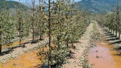 Photo of Започна обесштетувањето  на овоштарите во Преспа погодени од невремето во 2019 гдоина