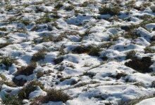 Photo of Здравјето на почвата во зима