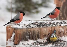 Photo of Хранење на птиците во зима