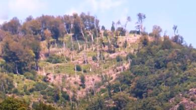 Photo of Неконтролираното уништување на шумите, една од главните причини што земјава има загаден воздух