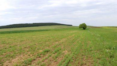 Photo of Еден процент од фармите обработуваат 70 проценти од светското земјоделско земјиште